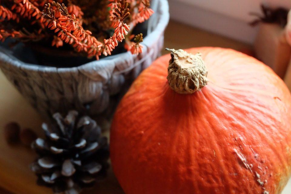 Jakie doniczki będą modne tej jesieni?